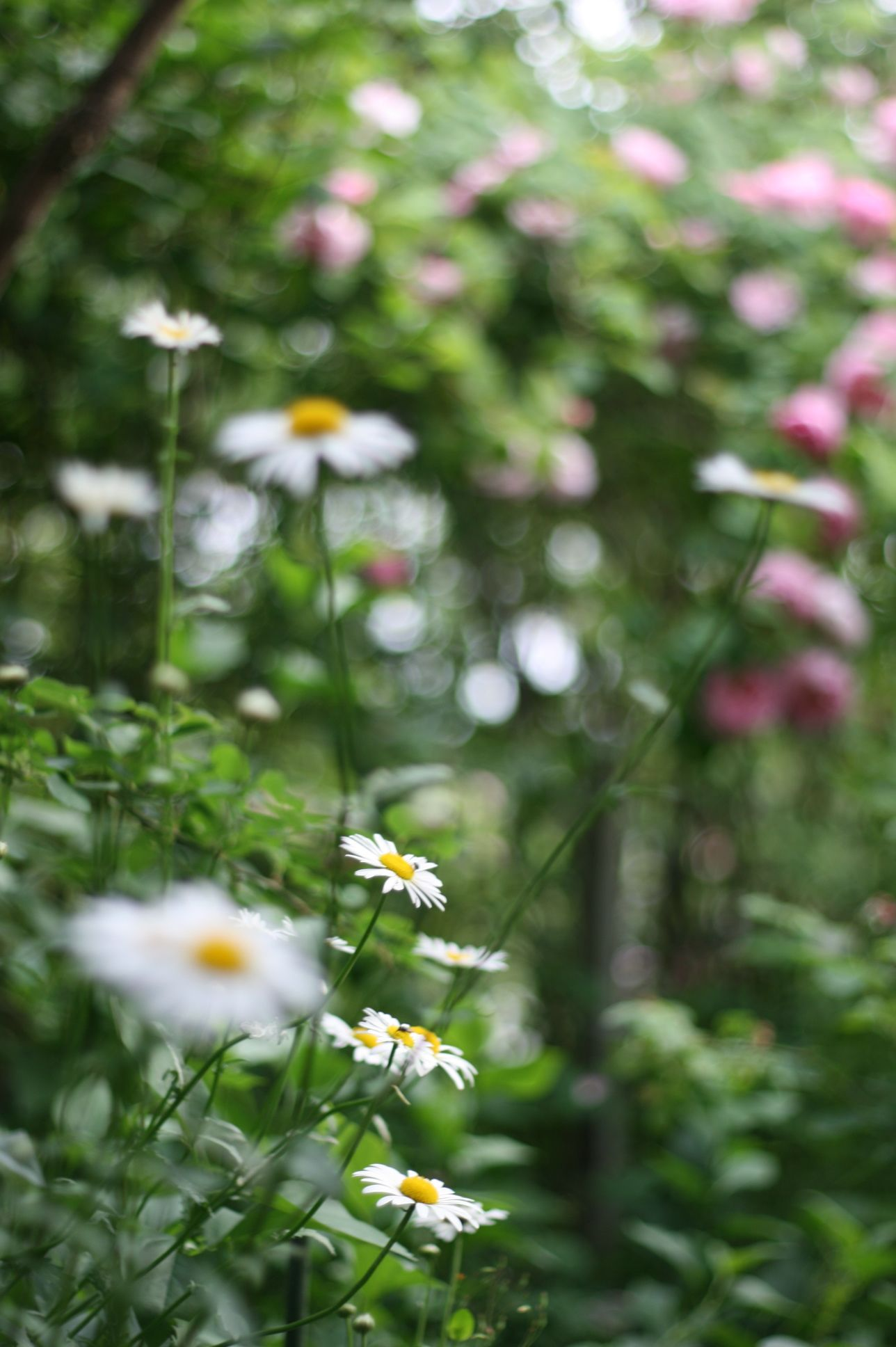 今日の庭 garden flower