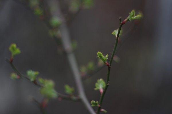 芽吹き - 1